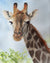 Giraffe Portrait Original Watercolor Painting