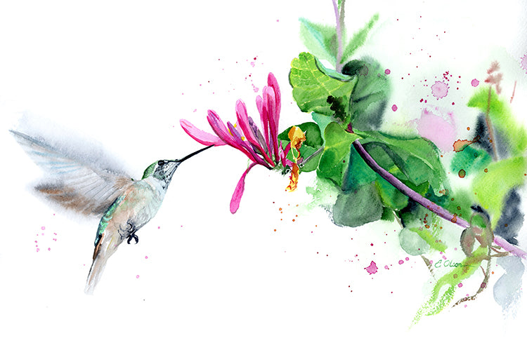 Hummingbird & Honeysuckle Original Watercolor Painting