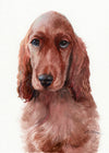 Irish Setter Puppy Original Watercolor Painting