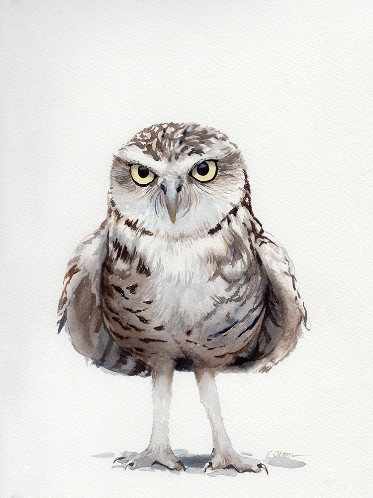 Little Burrowing Owl Original Watercolor Painting