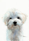 Maltese Puppy Original Watercolor Painting