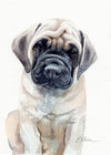 English Mastiff Puppy Original Watercolor Painting