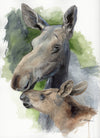 Mother and Baby Moose Original Watercolor Painting