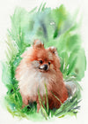 Garden Pomeranian Original Watercolor Painting