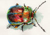 Rainbow Beetle Original Watercolor Painting