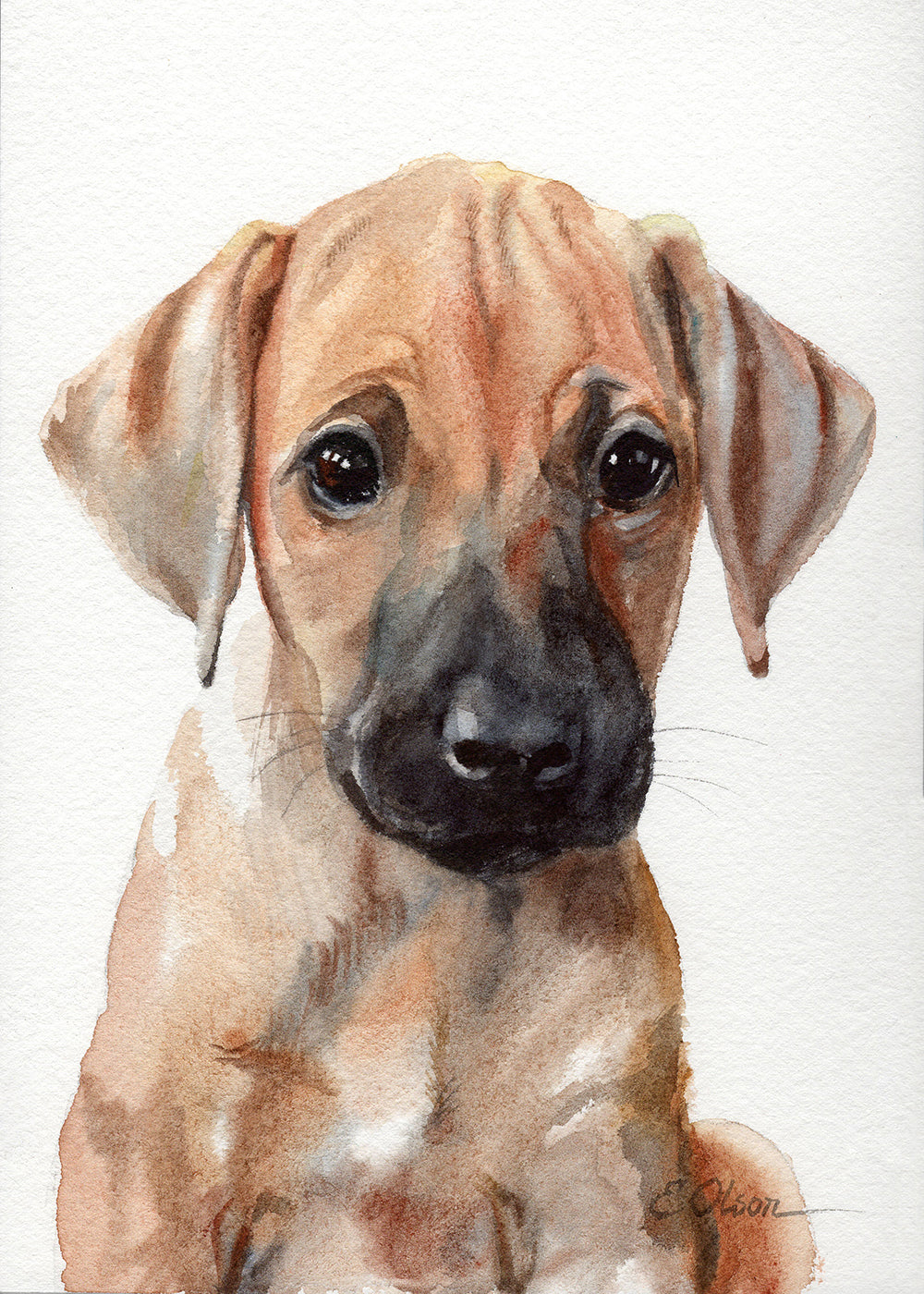 Rhodesian Ridgeback Puppy Original Watercolor Painting