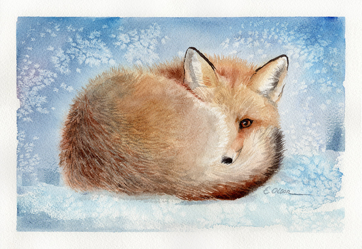 Curled Up Fox Original Watercolor Painting