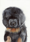 Tibetan Mastiff Puppy Original Watercolor Painting
