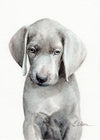 Weimaraner Puppy Original Watercolor Painting