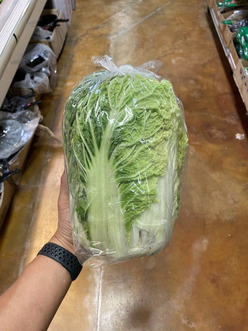 Vegetables Napa Cabbage (price is per lb, weight will be adjusted) - Eastside Asian Market