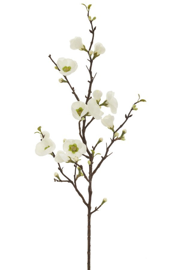 Spray Quince Blossom