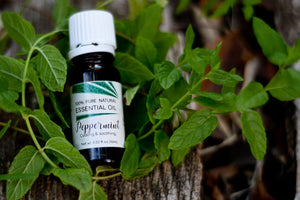 Peppermint Essential Oil (Mentha piperita)