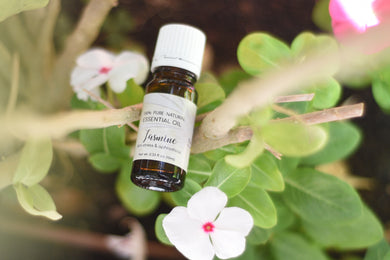 Jasmine (Absolute) Essential Oil (Jasminum grandiflorum)