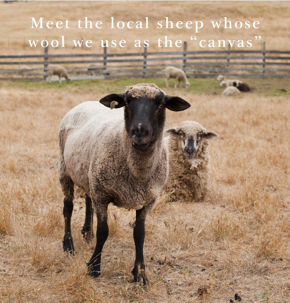 Meet the local sheep whose wool we use as the canvas.