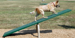 Dog agility equipment, dog teeter totter