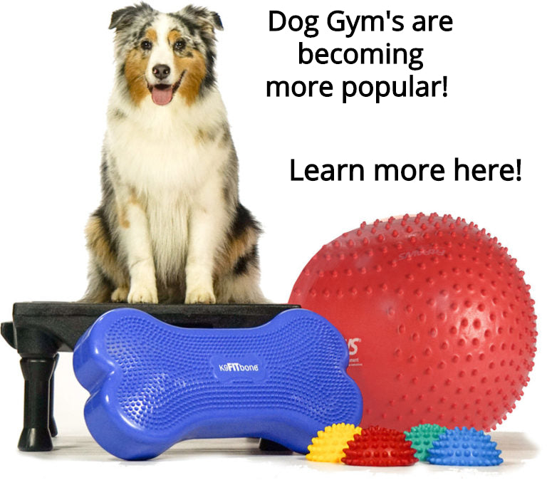 Dog Gyms gaining popularity!  Humans are realizing how important dog exercise is.