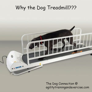 Why a dog treadmill?