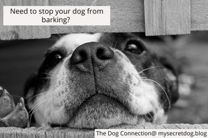 Stop dog barking, dog exercise