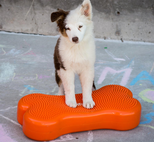 Conformation and Dog Show training equipment