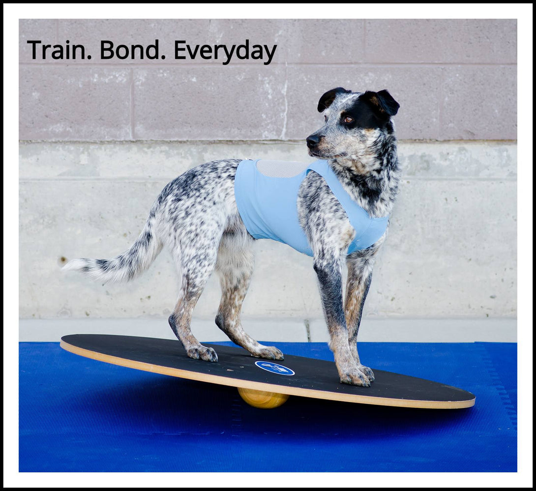 What is the difference between a Dog Wobble board and a Giant Rocker Board?