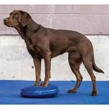 Dog gym, dog exercise equipment, agility training equipment