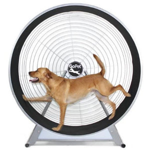 Dog gym, dog exercise equipment, dog agility equipment, dog treadmill, dog treadwheel