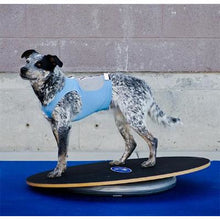 FitPAWS Wobble Board in 2 sizes- Free Shipping
