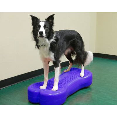 k9 balance bone, dog gym