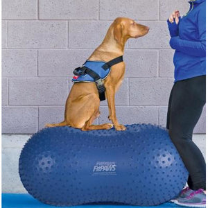 dog harness, dog gym
