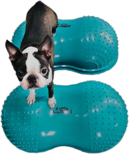 dog exercise equipment, dog fitness, fitpaws, peanut, cloud