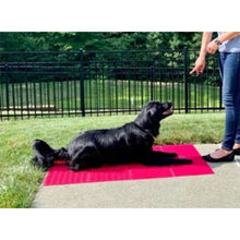 Dog gym, dog mat, go to mat