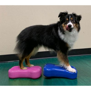 Dog gym, dog exercise equipment, dog agility equipment