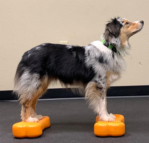 FitPAWS K9 FITbone- Mini- set of 2- Free Shipping, Training Guide & Pump