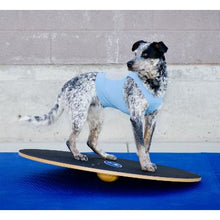 dog wobble board, dog gym