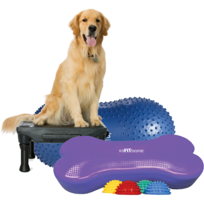 Dog gym, dog exercise equipment
