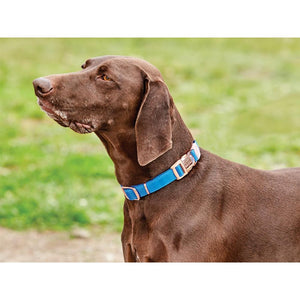 Weatherbeeta Elegance Dog Collar Blue