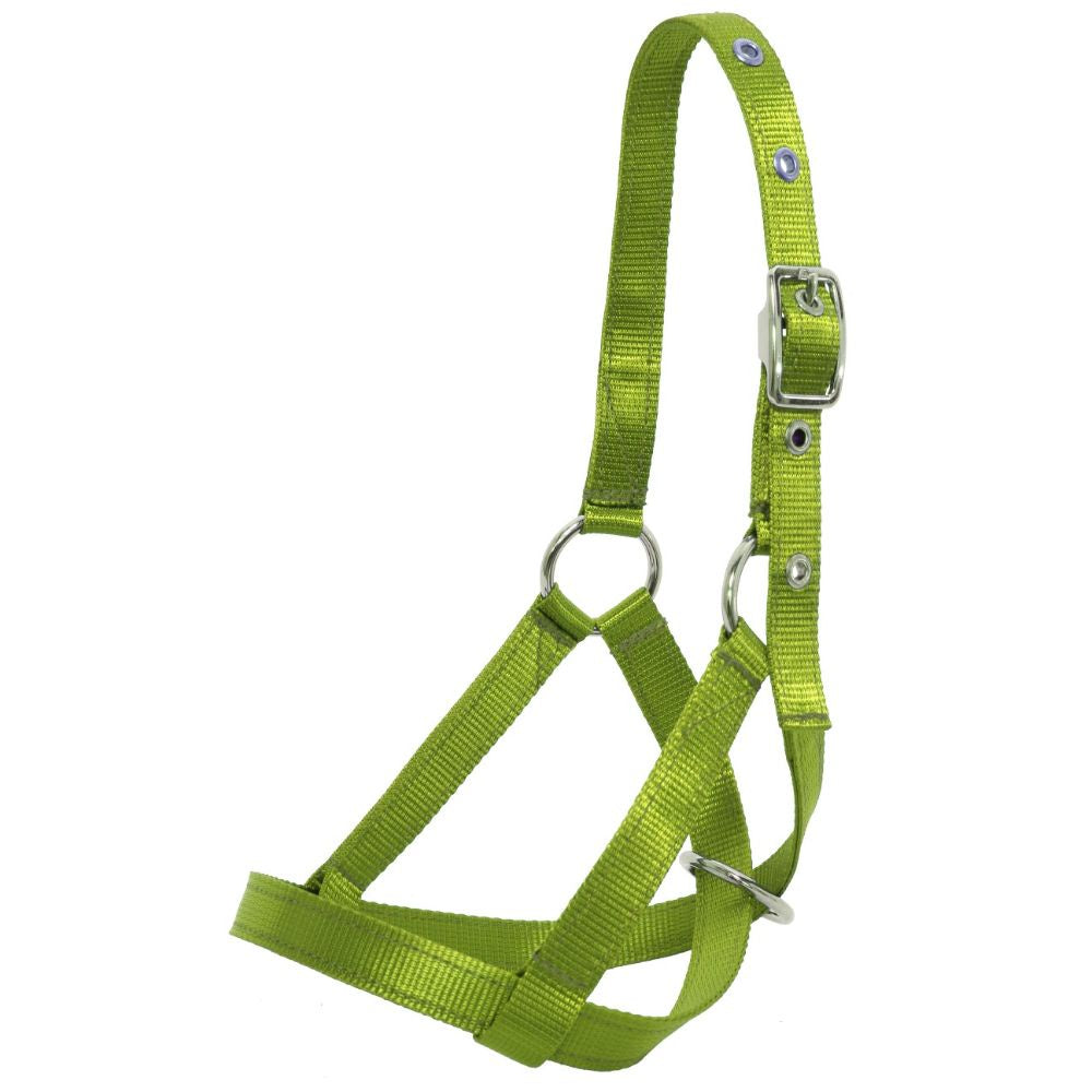 Web Calf Halter / Tethering Style