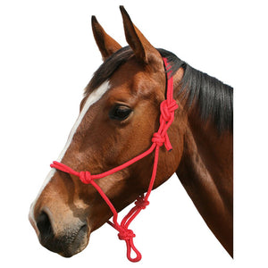 Blue Tag Rope Halter