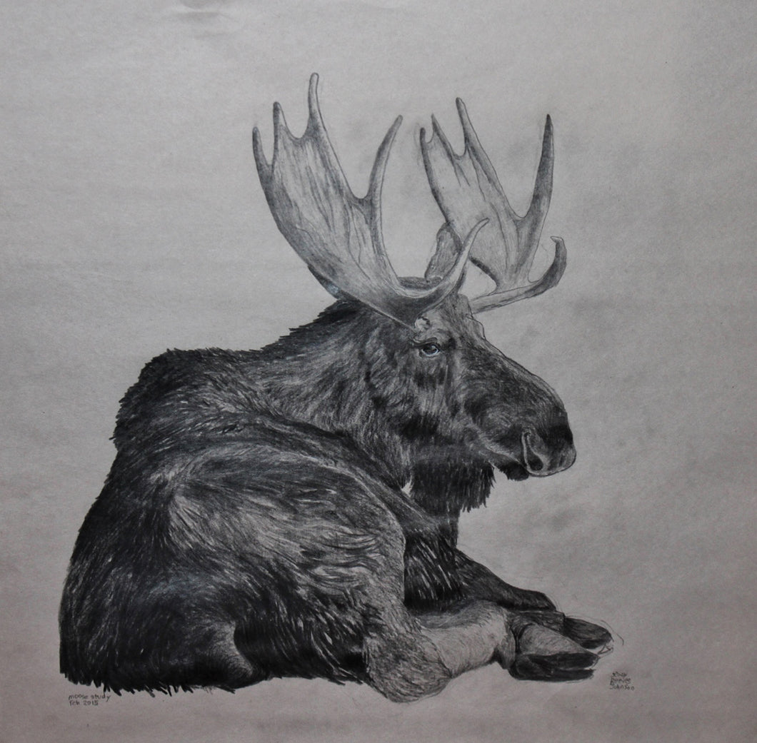 Mellow Moose Moment, Pencil by Jenny Reeves-Johnson