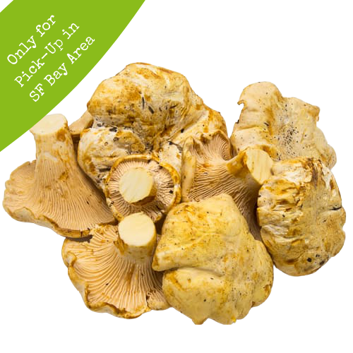 Fresh Chanterelles (1 lb)