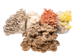 Mushroom Mini-Farms Variety Pack