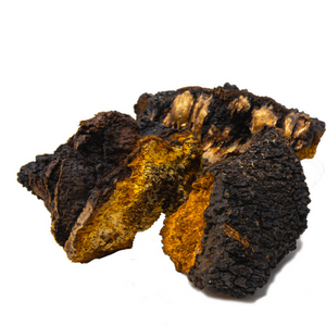 Dried Chaga Chunks