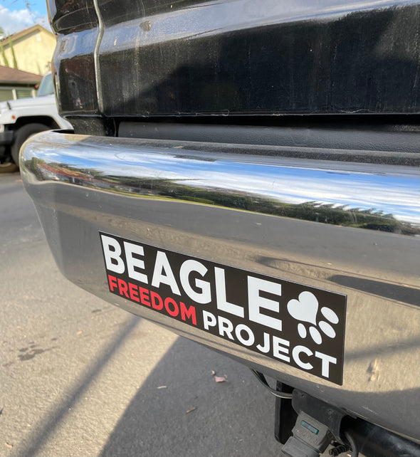 Magnets | BFP Logo Car Bumper Magnet