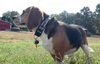 Accessory | Vintage BFP | Dog Collar