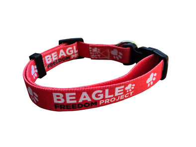 Accessory | BFP Signature | Dog Collar