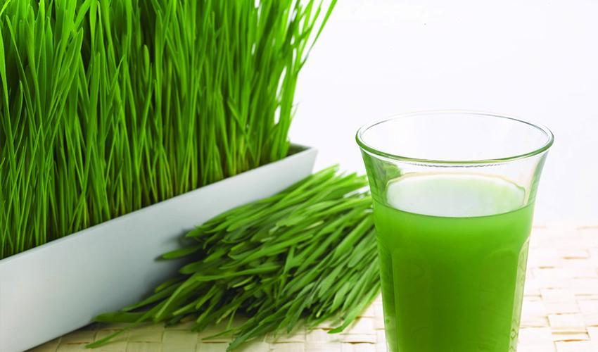 urban minimalist grow your own wheatgrass diy wheatgrass juice at home