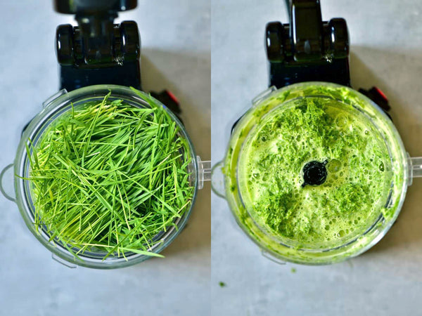 wheatgrass in blender using a 1 to 1 ratio of wheatgrass to water. Blend until thoroughly pulverized and the wheatgrass is a liquidy pulp.