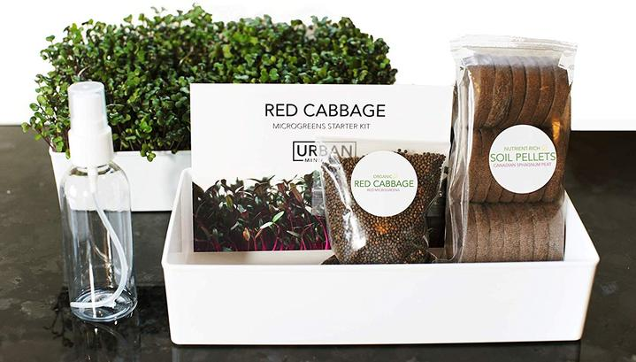 Grow Your Own Microgreens Starter Kit 3-Pack - Broccoli Brassica, Red Cabbage & Wheatgrass - Urban Minimalist