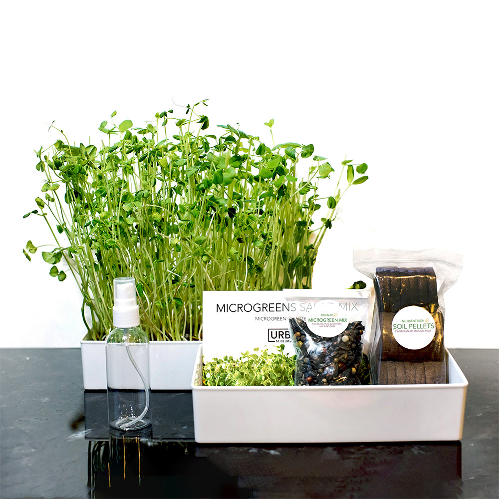 Grow Your Own Microgreens Salad Mix Kit - Urban Minimalist