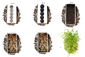 Grow Your Own Microgreens Starter Kit 3-Pack - Broccoli Brassica, Microgreen Salad Mix & Wheatgrass - Urban Minimalist